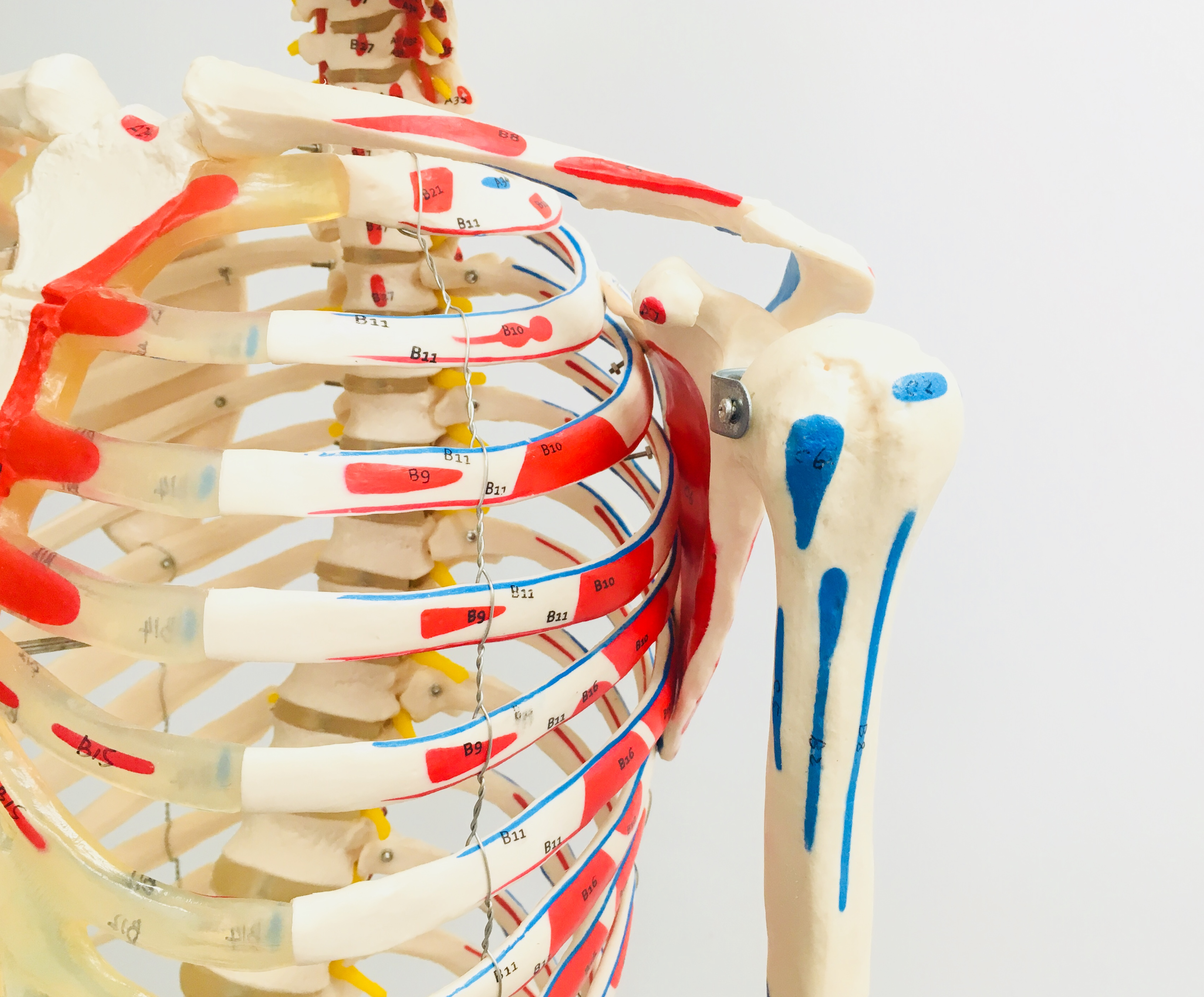 Be An Anatomy Hero: Shoulder Joint
