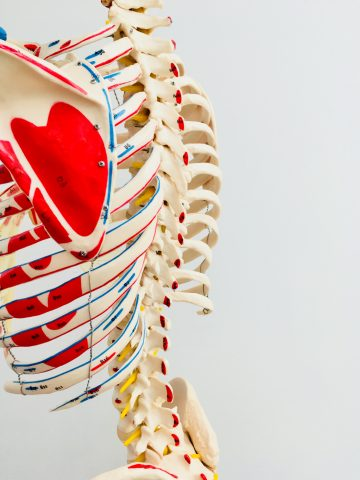 Be An Anatomy Hero Spine