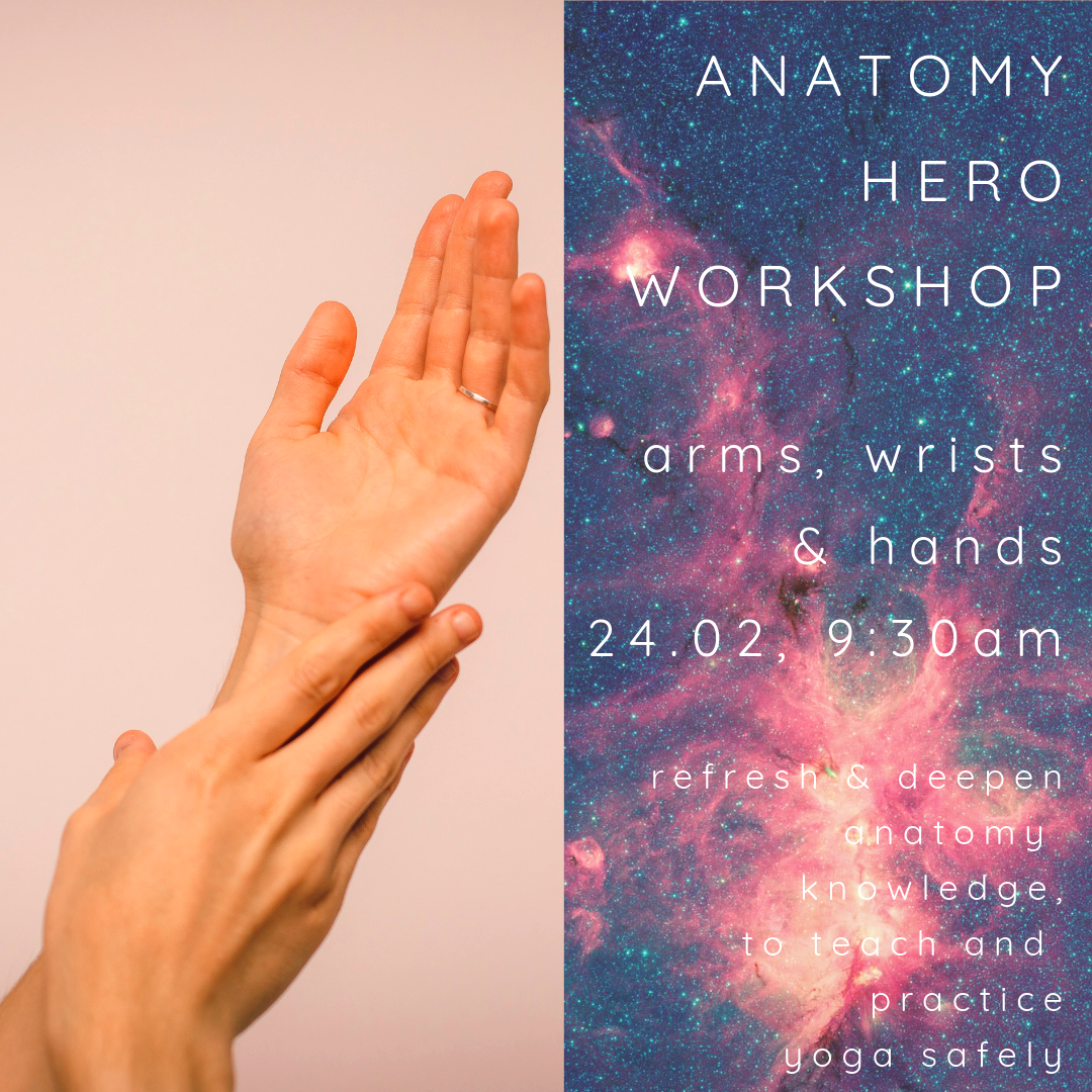 ANATOMY HERO Arms Wrists Hands 2402 2