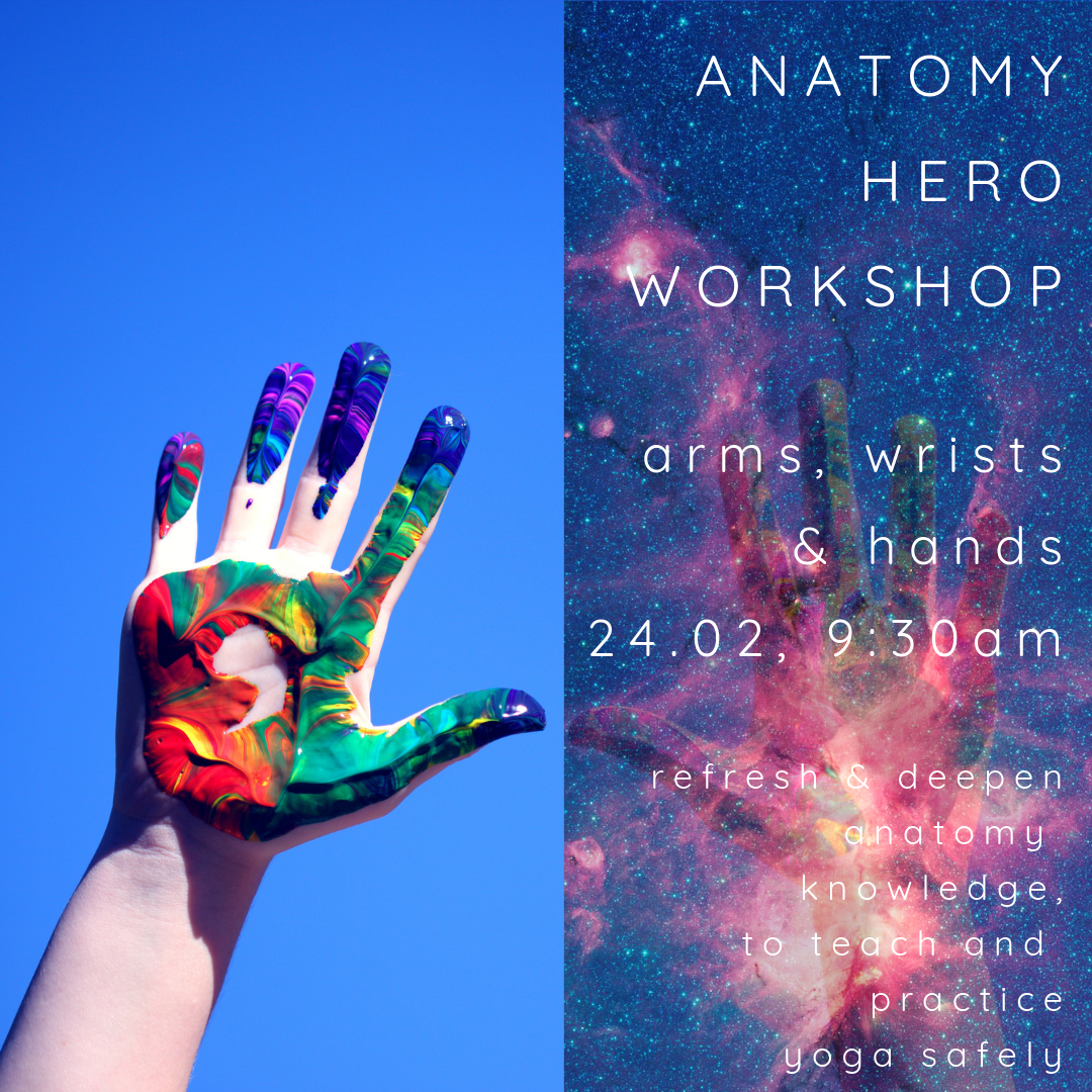 ANATOMY HERO Arms Wrists Hands 2402