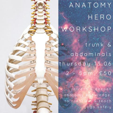 Anatomy Hero Trunk Abdominals 13.06