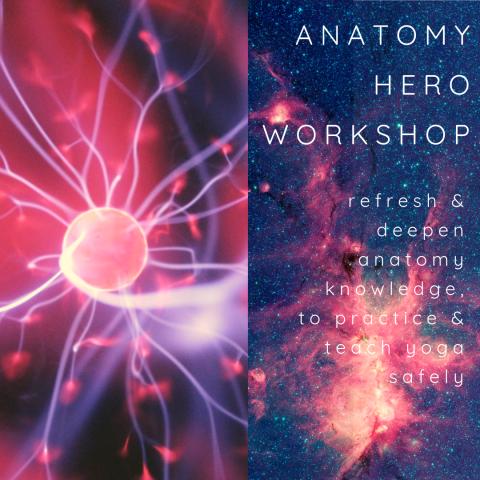 Anatomy Hero Nervous System